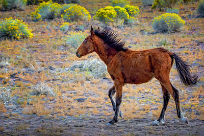 Photograph - Wild And Free Mustang Colt by LeeAnn McLaneGoetz McLaneGoetzStudioLLCcom