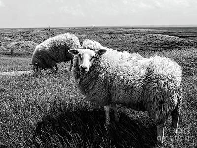 Photograph - Wild And Wooly by Lexa Harpell