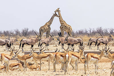 Photograph - Wild Animals Pyramid by Benny Marty