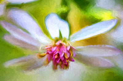 Weed Digital Art - Wild Aster 4 - Paint by Steve Harrington