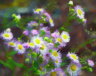Photograph - Wild Aster Digital Art by Sharon Talson