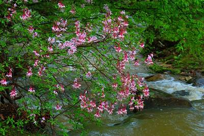 Photograph - Wild Azalea Bush by Kathryn Meyer
