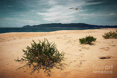 Turf Photograph - Wild Beach by Carlos Caetano