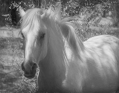 Photograph - Wild Beauty Bw by Teresa Wilson