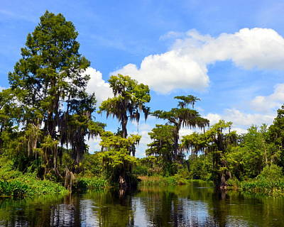 Photograph - Wild Beauty On The Wakulla River by Carla Parris