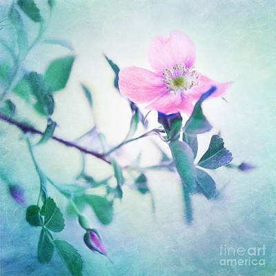 Wild Beauty Art Print by Priska Wettstein