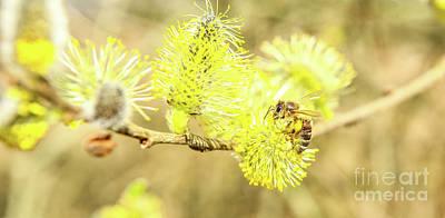 Wild Bee Spring Art Print