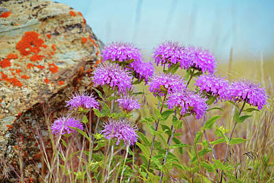 Photograph - Wild Bergamot by Whispering Peaks Photography