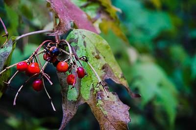 Photograph - Wild Berries 2 Fall by Desmond Raymond