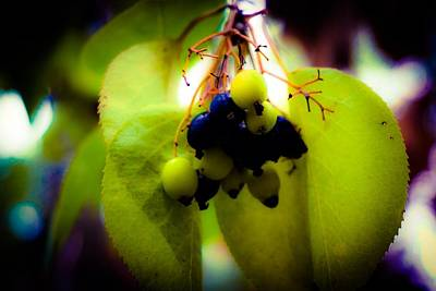 Photograph - Wild Berries In Fall by Desmond Raymond