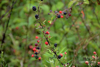 Photograph - Wild Berries In Georgia by Adrian DeLeon