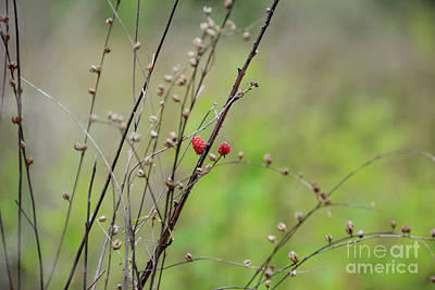 Photograph - Wild Berry Duo - Georgia by Adrian DeLeon