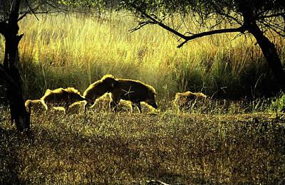 Photograph - Wild Boar by Manjot Singh Sachdeva