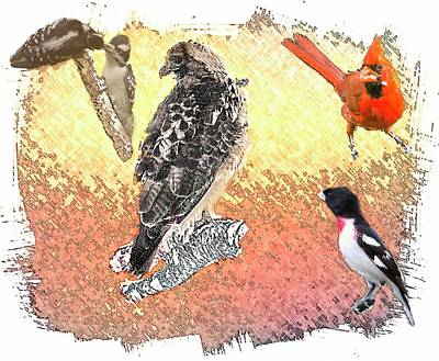 Red Tail Hawk Digital Art - Wild Bird Collage by Rusty Smith