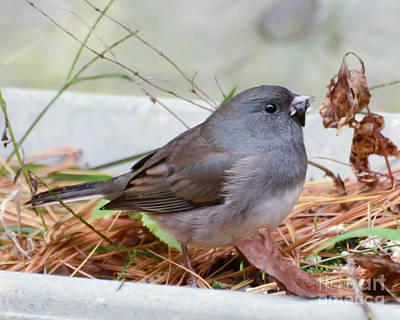 Photograph - Wild Birds - Dark-eyed Junco by Kerri Farley