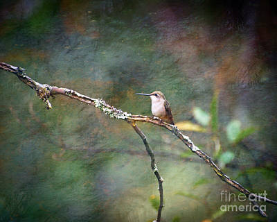 Photograph - Wild Birds - Hummingbird  by Kerri Farley