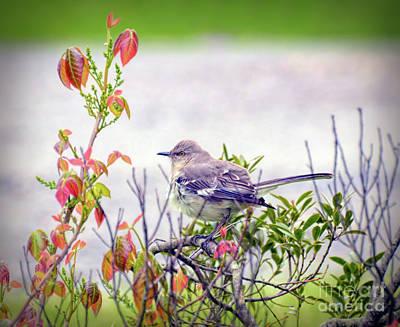 Photograph - Wild Birds - Northern Mockingbird by Kerri Farley