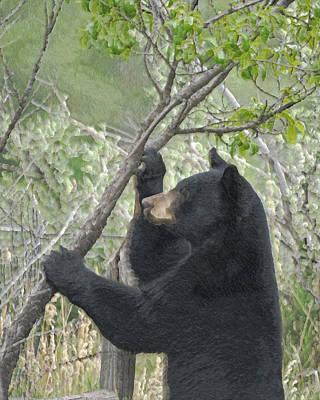 Photograph - Wild Black Bear by Ernie Echols
