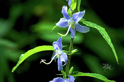 Wild Blue Flowers Art Print