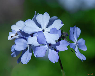 Photograph - Wild Blue Phlox Dspf0387 by Gerry Gantt