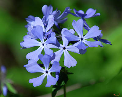 Photograph - Wild Blue Phlox Dspf0388 by Gerry Gantt