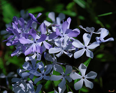 Photograph - Wild Blue Phlox Dspf0395 by Gerry Gantt