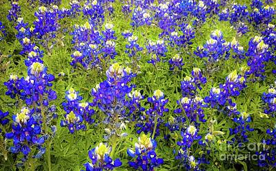 Art Print featuring the photograph Wild Bluebonnets Blooming by D Davila