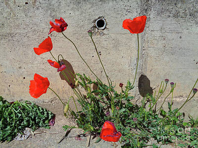 Photograph - Wild Bouquet Of Poppies by Don Pedro De Gracia
