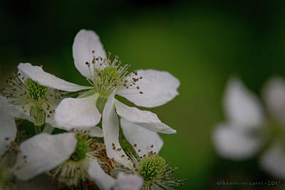 Photograph - Wild Briar Flower by Henri Irizarri