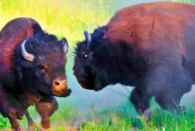 Photograph - Wild Buffalo Fight by Ginger Wakem