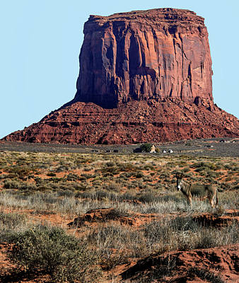 Photograph - Wild Burro Of Utah Near Monument Valley by Phil Cardamone