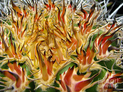 Photograph - Wild Cactus by C Ray  Roth