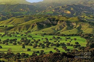 Photograph - Wild California Oaks In Verdant Green Valley California by Dave Welling