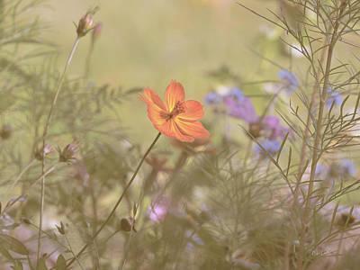 Photograph - Wild California Poppy by Bob Orsillo