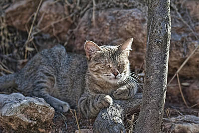 Photograph - Wild Cat 2 by Isam Awad