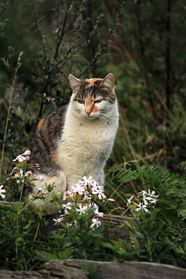 Photograph - Wild Cat And Flowers by Elenarts - Elena Duvernay photo