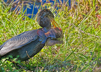 Photograph - Wild Catch by Judy Kay