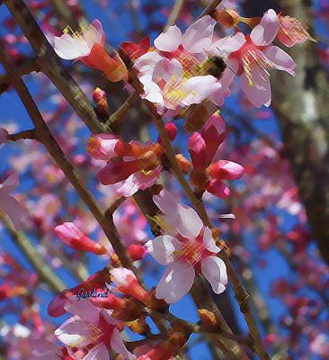 Wild Cherry Tree In Bloom Art Print by Garland Johnson