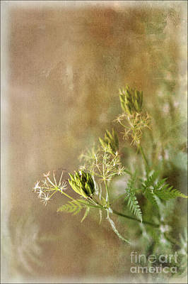 Cow Parsley Wall Art - Digital Art - Wild Chervil - Textured by Liz Alderdice