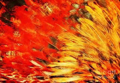 Wild Chicken Feathers Art Print by Jan Gelders