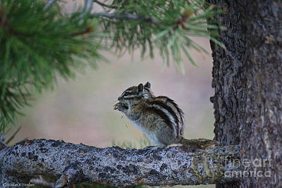 Photograph - Wild Chippy by Susan Herber