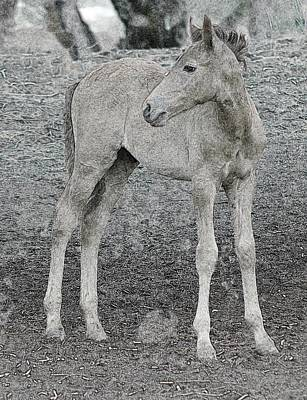 Photograph - Wild Colt Photo Art 0054-080314 by Tam Ryan