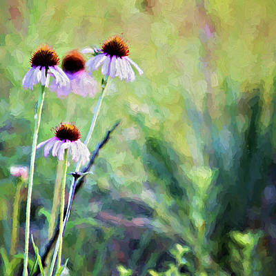 Photograph - Wild Coneflowers by Lana Trussell