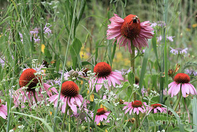 Photograph - Wild Coneflowers by Paula Guttilla