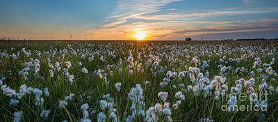 Autumn Pies - Wild Cotton Field Panorama  by Michael Ver Sprill