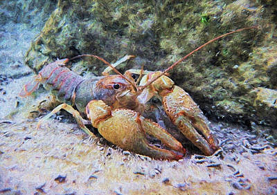Photograph - Wild Crawfish  by JC Findley