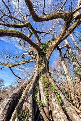 Photograph - Wild Cypress by Alan Raasch