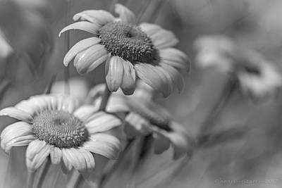 Photograph - Wild Daisies  by Henri Irizarri