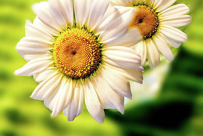 Photograph - Wild Daisies Macro by Barry Jones