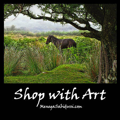 Photograph - Wild Dartmoor Pony Foal - Shop With Art by Menega Sabidussi